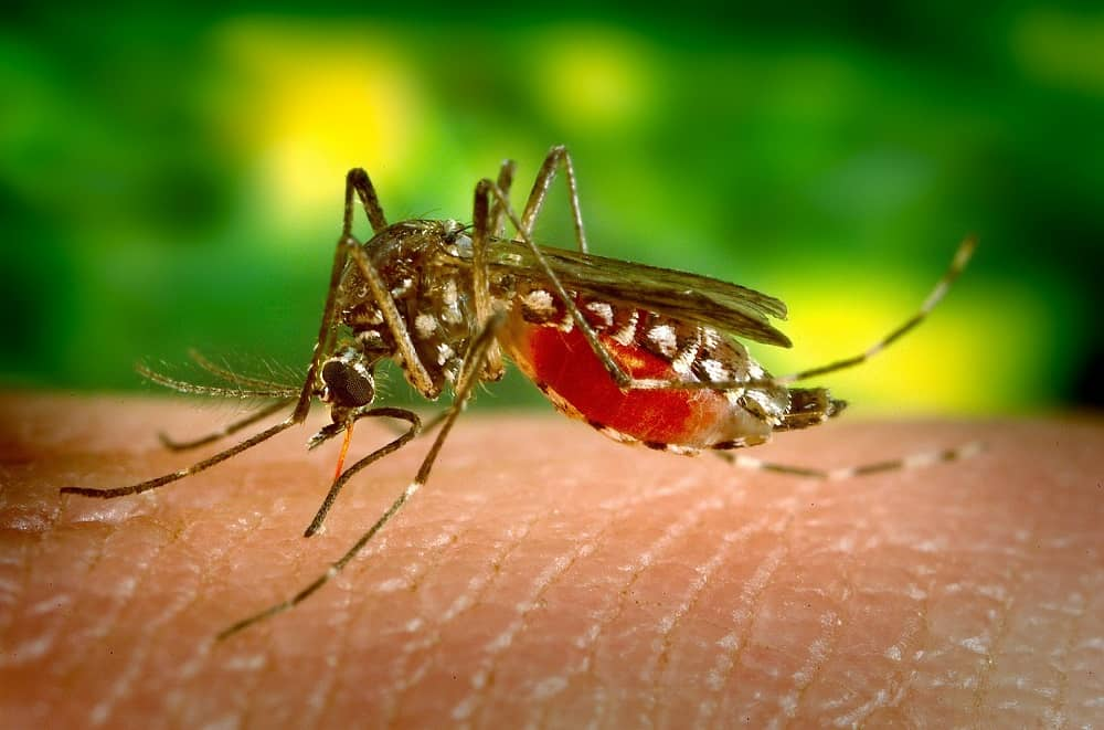 Mosquito auf der Haut (risikoreiche Reiseländer)
