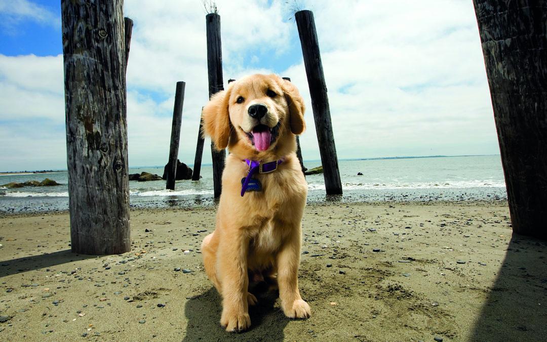 Ostsee-Urlaub mit Hund