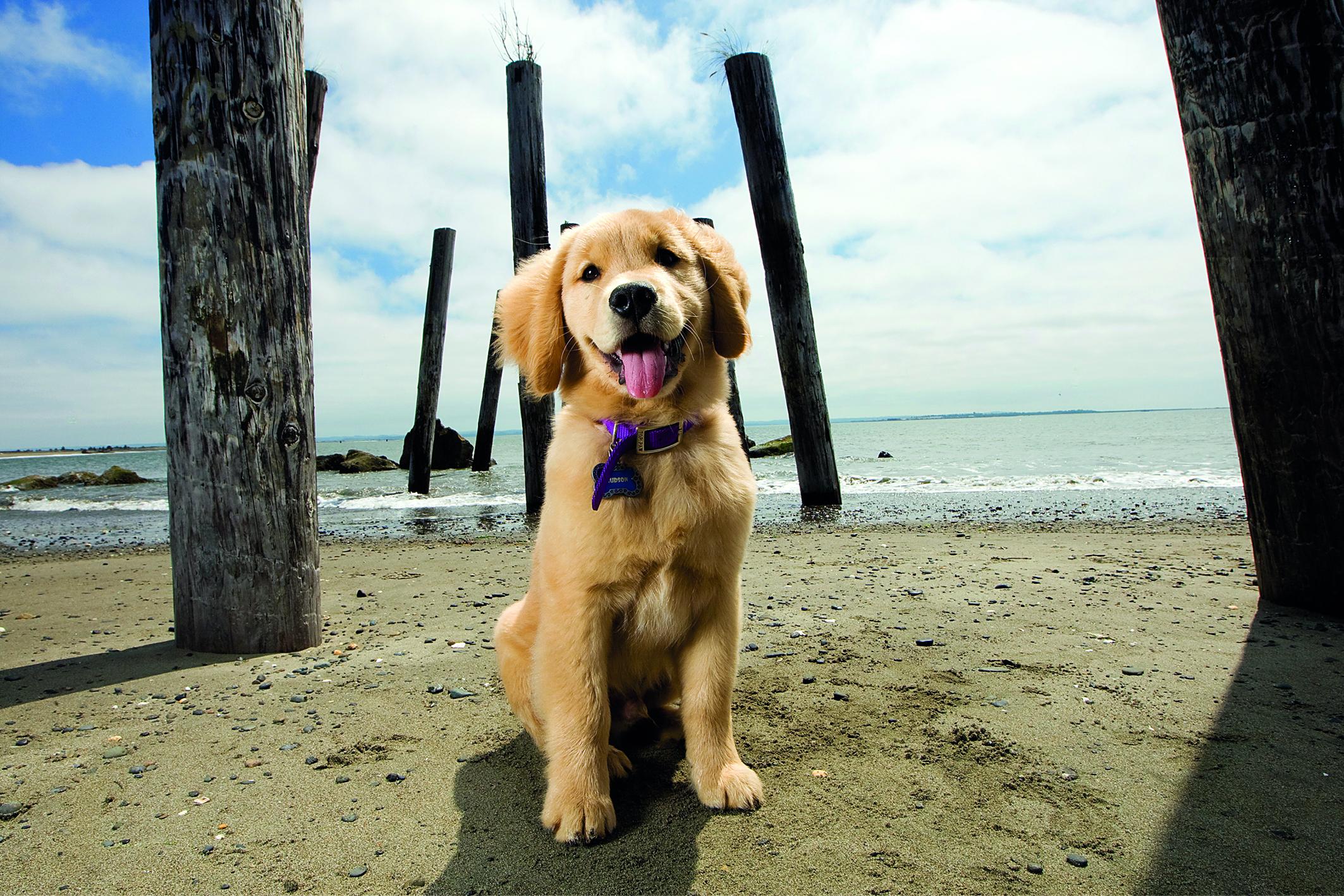 Ostsee-Urlaub mit Hund: kleiner Welpe sitzt am Strand