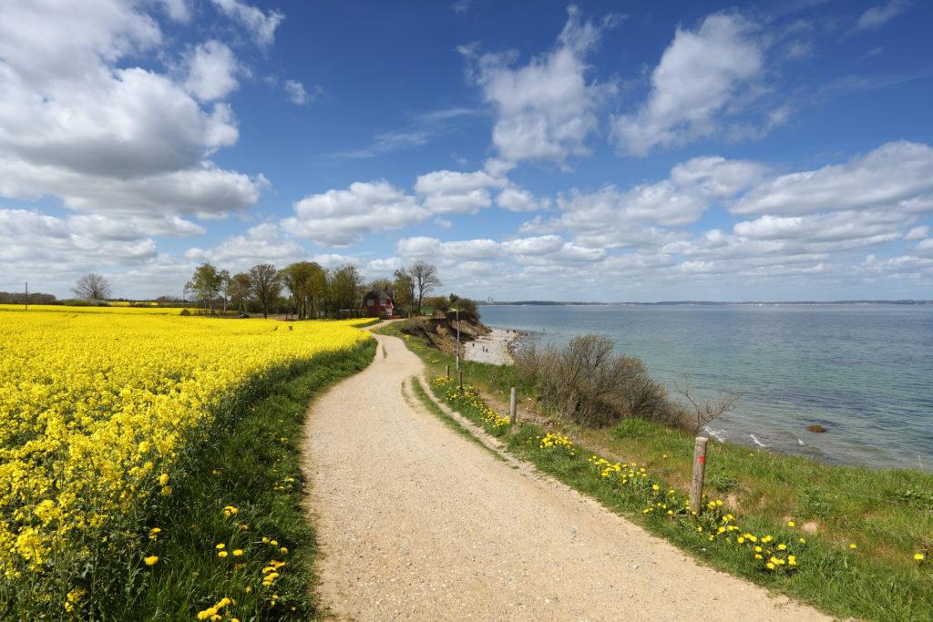 Ein Fahrradweg entlang der Ostsee, Rapsfelder und Meer.